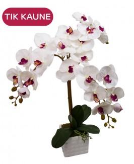 Dirbtinės baltos orchidėjos