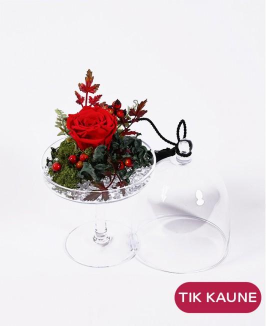 Raudona mieganti rožė taurėje