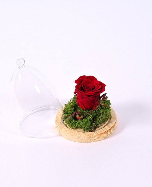 Raudonos miegančios rožės kompozicija po stiklu
