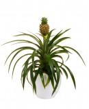 Ananasas (dekoratyvinis)