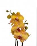 Įvairių spalvų orchidėjos
