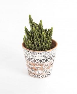 Kaktusas 2