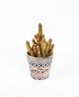 Kaktusas (Mamiliaria)