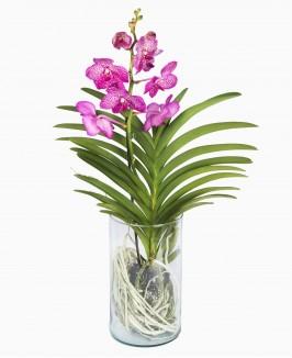 "Orchidėja ""Vanda"""