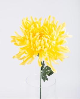 Geltonos spalvos chrizantema