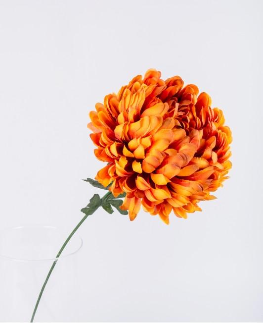 Oranžinės spalvos chrizantema