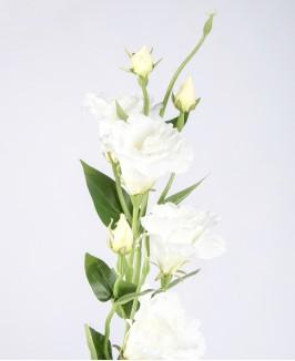 Dirbtinė balta eustoma