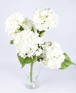 Baltos dirbtinės hortenzijos