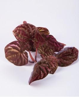Paparčio lapai (raudoni)