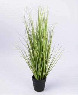 Žolė vazone