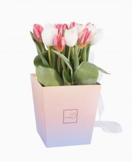 Tulpės ombre dėžutėje