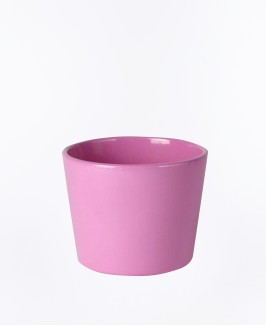 Primrose mini rožinis vazonas