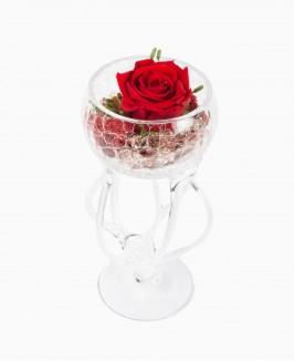 Mieganti rožė taurėje
