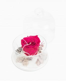 Mieganti rožė (tamsiai rausva)