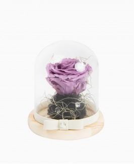 Mieganti violetinės spalvos rožė