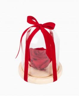 Mieganti rožė po stiklo kupolu (raudona)