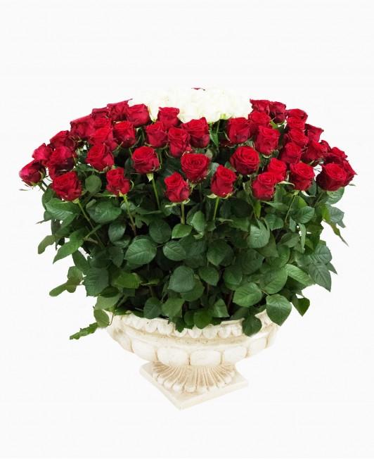 Didžiulė rožių puokštė
