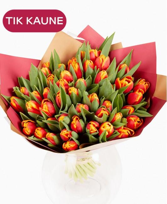 Raudonos su geltonu krašteliu tulpės