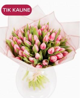 Rausvos tulpės