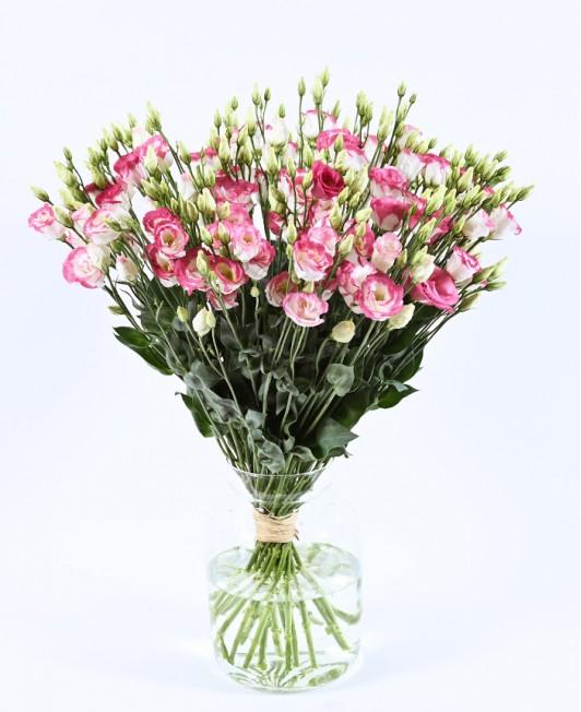 Baltos eustomos su rožiniu krašteliu