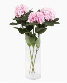 Hortenzijos (rožinės)