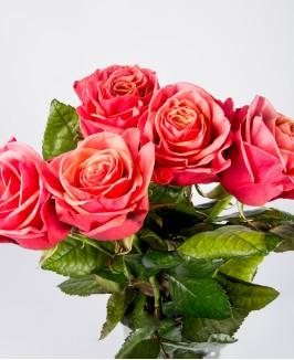 Bubble Gum rožės