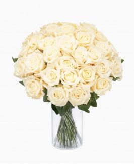Baltos spalvos rožės