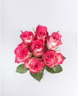 """Rožė vienžiedė """"Double Date"""""""