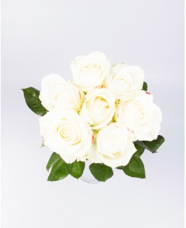 """Rožė vienžiedė """"Avalanche"""""""