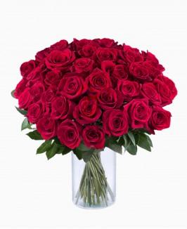 Raudonos spalvos rožės