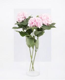 Rožinė hortenzija