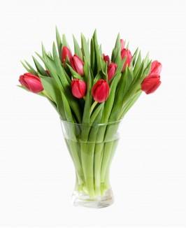 Raudonos spalvos tulpės