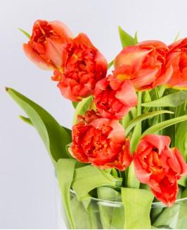 Oranžinės tulpės