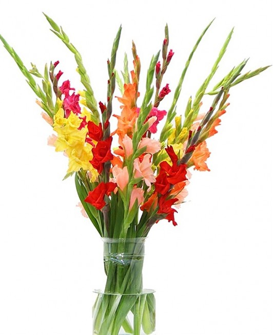 Įvairių spalvų kardeliai (gladiolės)