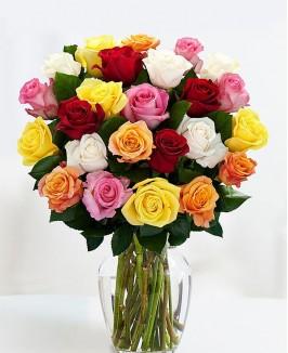 Įvairių spalvų rožės 2
