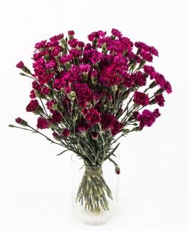 Violetinės spalvos gvazdikėliai