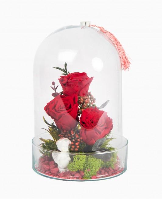 Miegančios rožės po stiklo kupolu