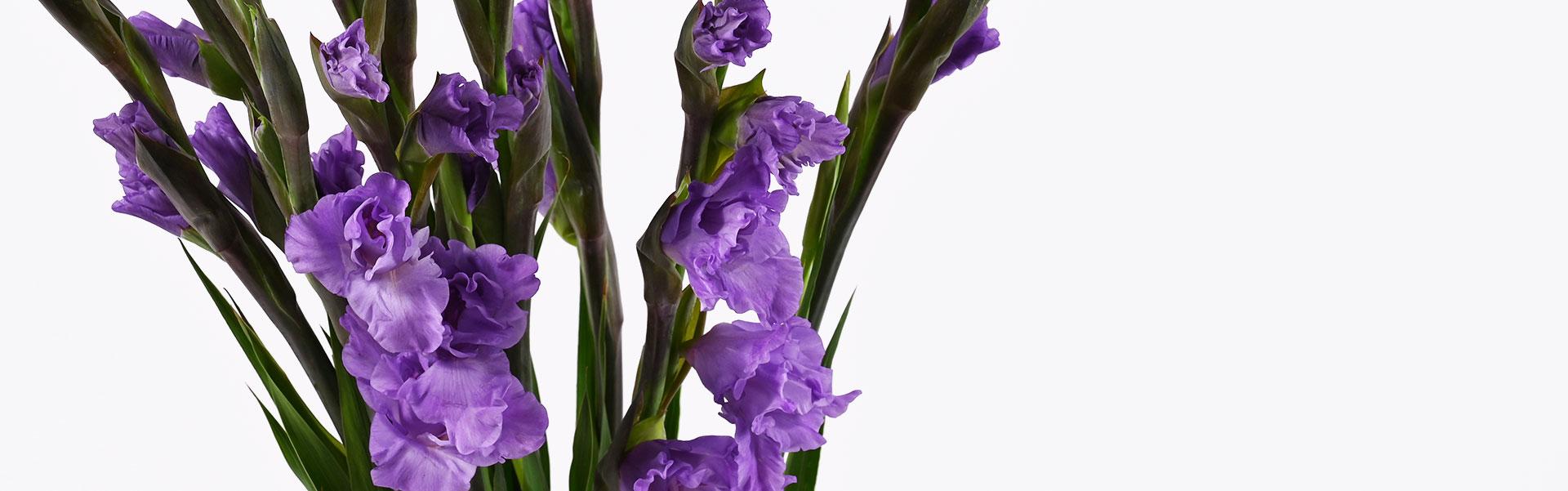 Gėles pristatysime visoje Lietuvoje. Užsisakykite➔